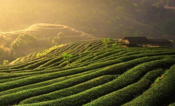 Heerlijke thee uit Sri Lanka voor Orange Blend